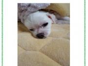 제목: 우리 집 강아지 유리(닉네임: O.M)  제가 키우는 강아지의 이름은 '유리'라고 합니다. 유리라고 하는 이름은 일본에서는 백합 꽃이라는 의미입니다. 유리는 저에게 가족이며 친구인 유일무이한 존재입니다. 유리는 우리 친정에서 태어났기 때문에 태어났을 때부터 항상 함께 하고 있습니다. 아침에 같이 일어나서 밥을 먹고 근처로 산책을 갑니다. 제가 일을 하러 나가면 집에서 기다리고 있습니다. 그 때 감시 카메라로 보면 유리는 자고 있는 일이 많은데 가끔 지루할 것 같습니다. 점심에 한번 집에 돌아가기는 하지만 저녁 이후에 집으로 돌아갈 때까지 혼자서 집을 봅니다. 여행도 수없이 같이 갔고 항상 저와 함께 놀아 줍니다.